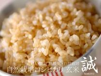 自然栽培コシヒカリ 誠 玄米 2.5kg