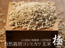 自然栽培コシヒカリ 極 玄米 2.5kg
